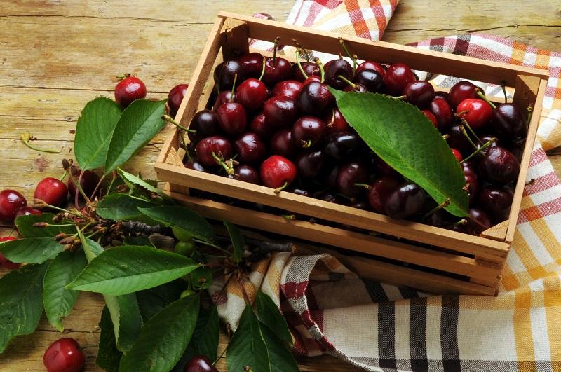 Difference Morello Cherries Sour Cherries Marasca Cherries